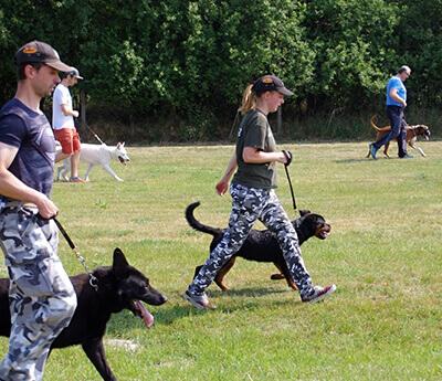 Výcvik psov podľa skúšobného poriadku. Výcvik spoločenských psov – domáca kynológia..