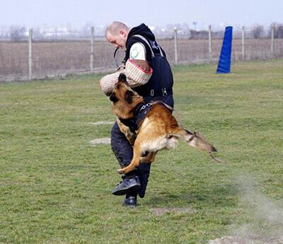 Výcvik psov na osobnú a ochranu a stráženie objektov.